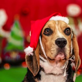 Day Care para cães na Zona Leste