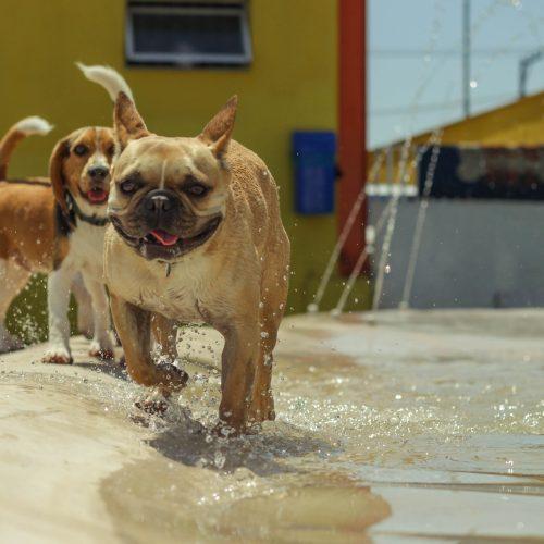 creche para cães na zona leste, vila diva