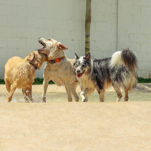creche para cachorros na zona leste, vila diva
