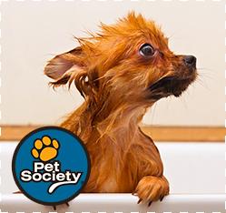 banho-body-splash-caes-gatos