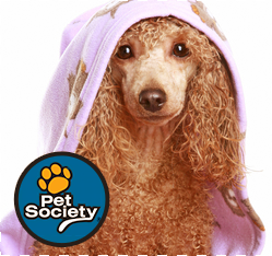 banho-seco-cachorro1
