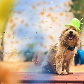 creche para cães na zona leste são paulo