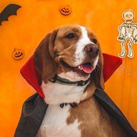 creche para cães na zona leste, vila diva - evento halloween 2017