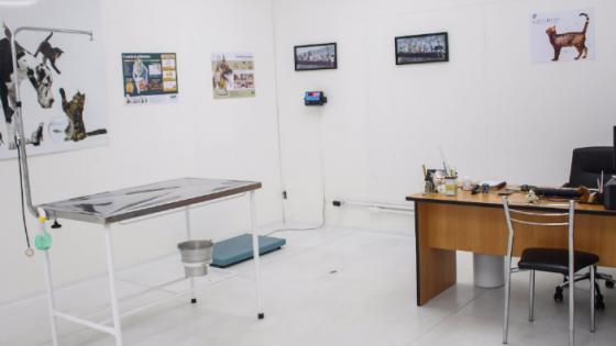 Clinica Veterinária na Zona leste