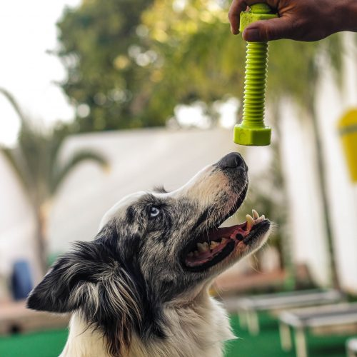 creche para cachorros na zona leste são paulo
